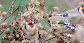 Putters / Shutterstock