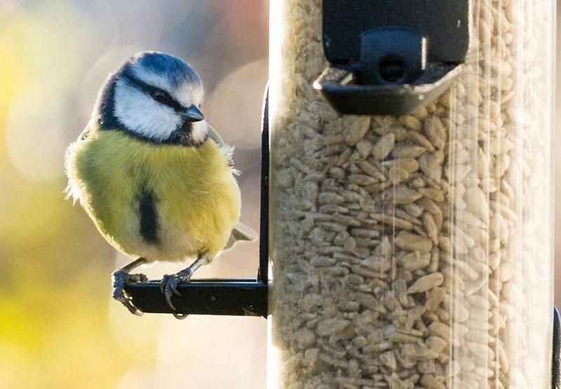 Pimpelmees / Shutterstock