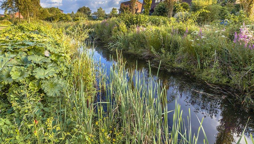 Stadsnatuur in Soest / Shutterstock