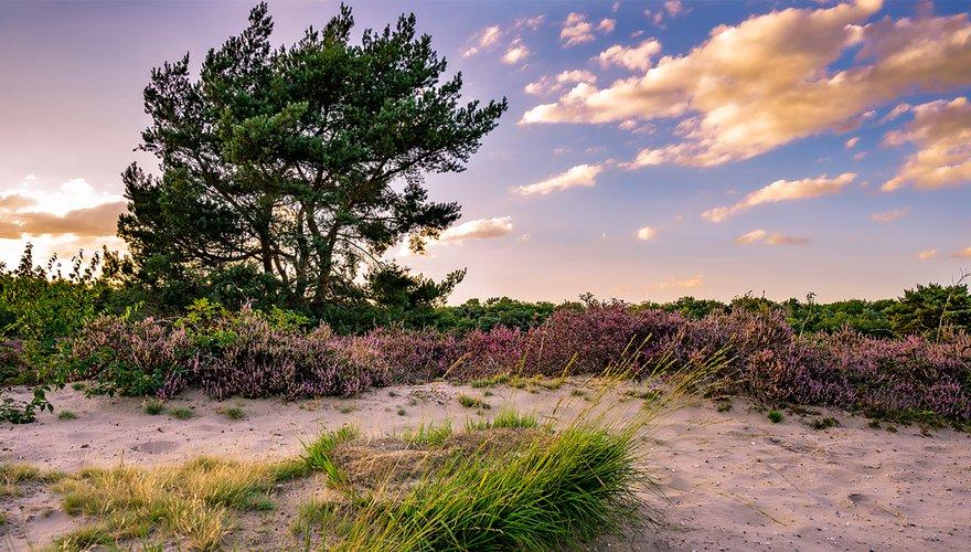 De Maashorst / Shutterstock