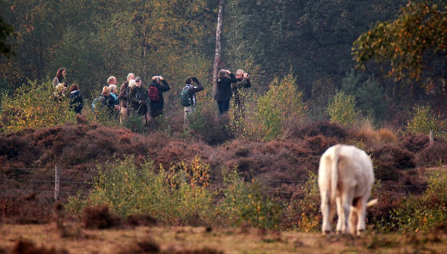Excursie Vogelwerkgroep Het Gooi / Yvette Kusters