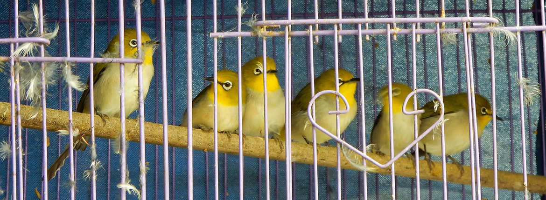 Brilvogels / Nature in Stock