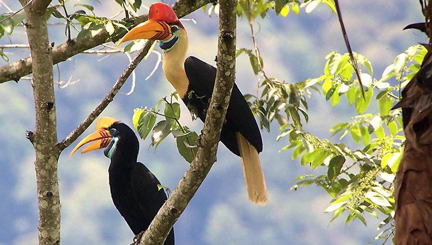 Sulawesi jaarvogel