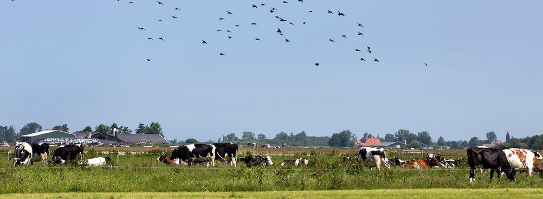 Landschap Jan Peenstra / Fred van Diem