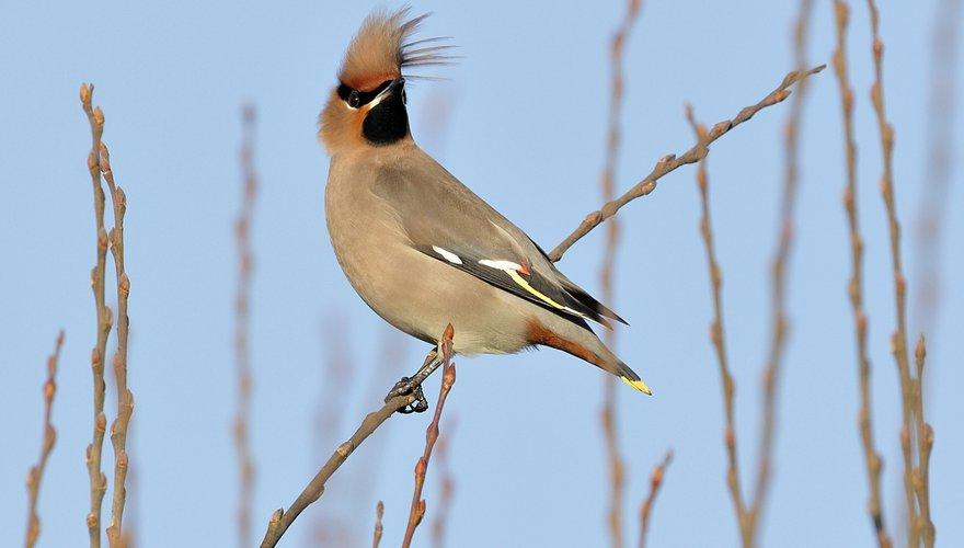 Pestvogel wind / Jelle de Jong