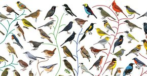Birds of the World / BirdLife International