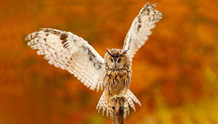 Ransuil / Shutterstock