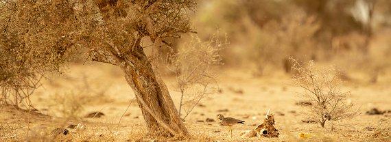 Boom in Afrika / Lars Soerink