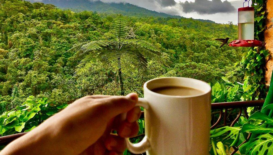 Koffie in regenwoud / Shutterstock
