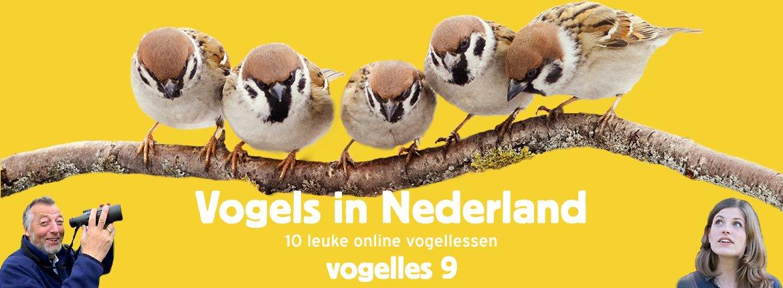 Vogels in Nederland - Vogelles 9