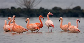 Flamingo's / Nick Janssen
