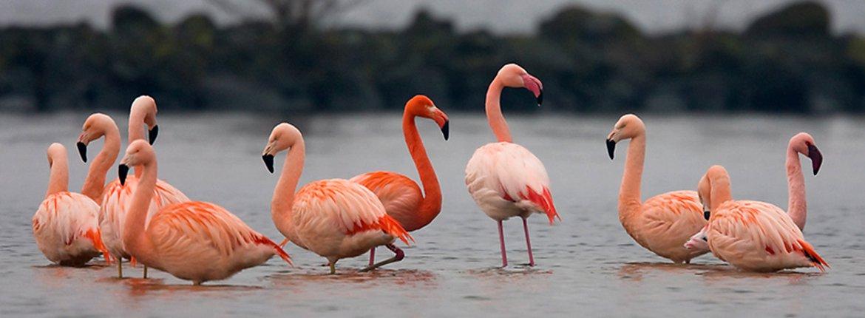 Flamingo's / Nick Janssen