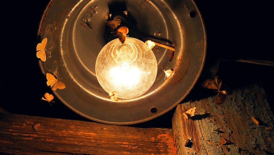 Vlinders bij lamp / Shutterstock