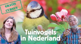 Aanmelden Tuinvogelcursus