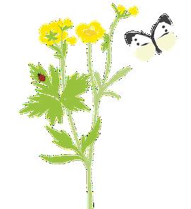 Boterbloem met vlinder / Anne-Lieke Struijk
