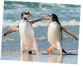 Pinguin / Shutterstock