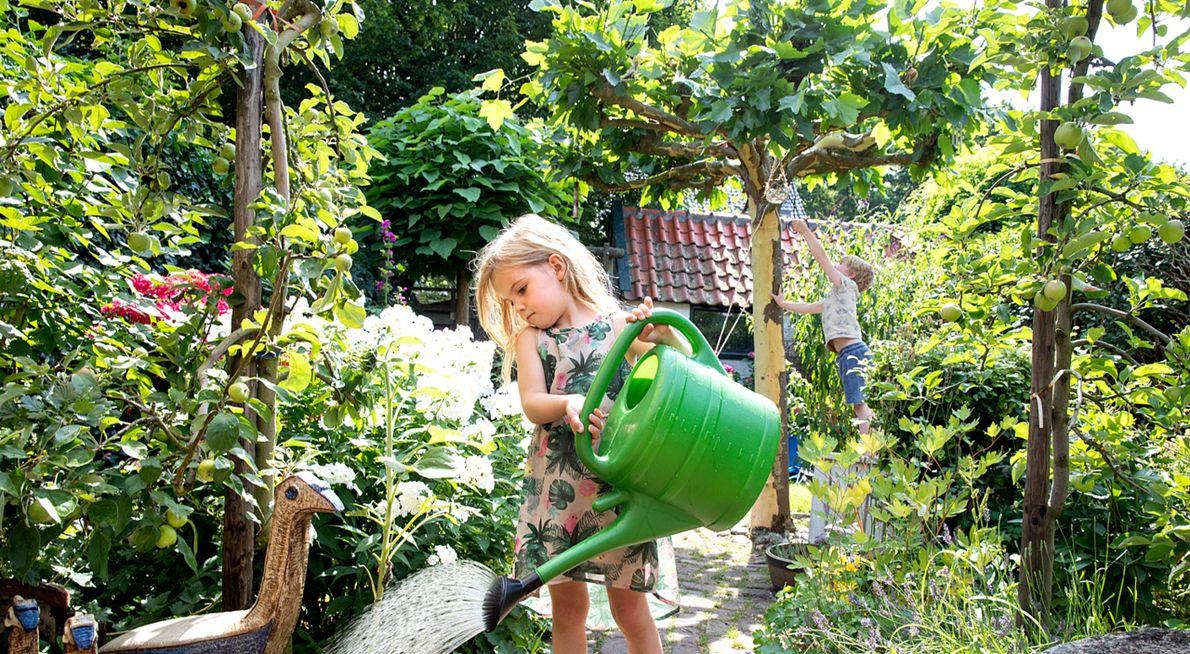 Appelboom in tuin / Fred van Diem