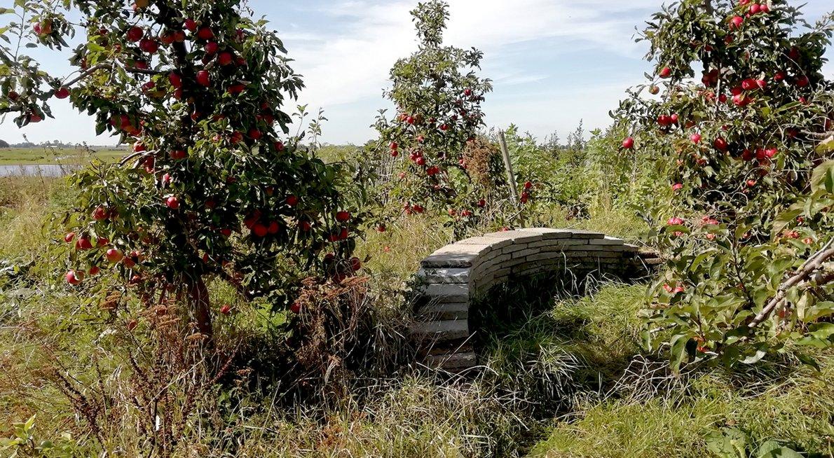 Fruit en stapelmuur in tuin van Ingeborg Lewis