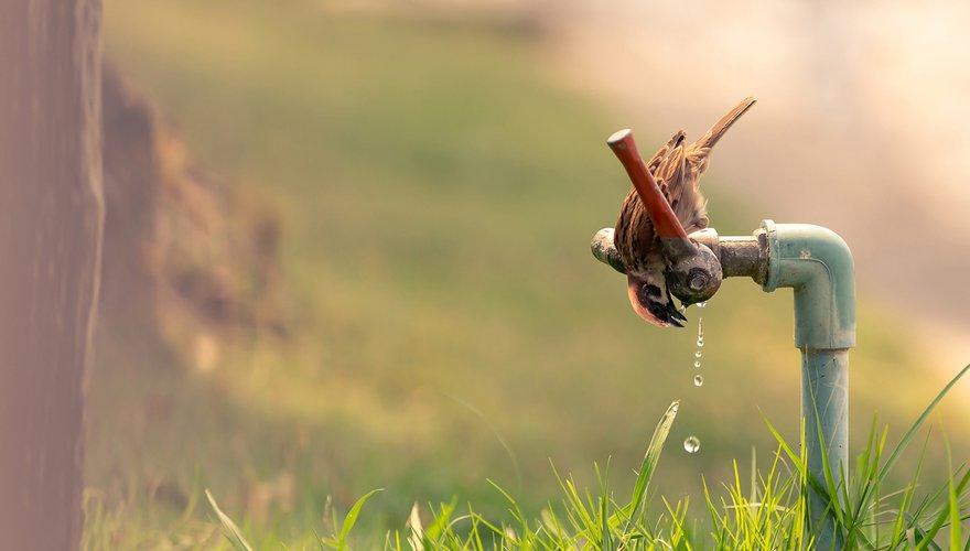 Ringmus / Shutterstock
