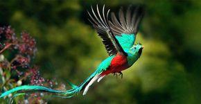 Quetzal / Shutterstock