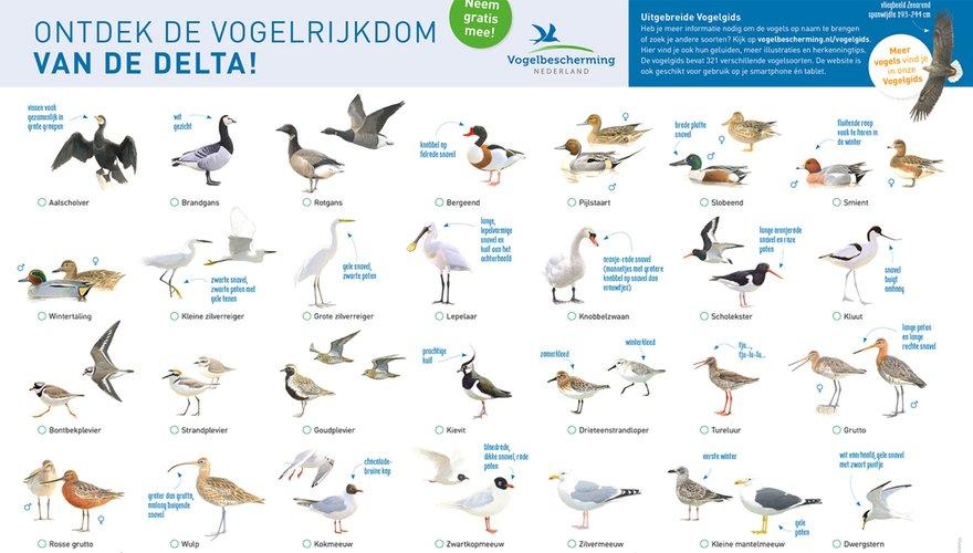 Vogelkaart Zuidwestelijke Delta