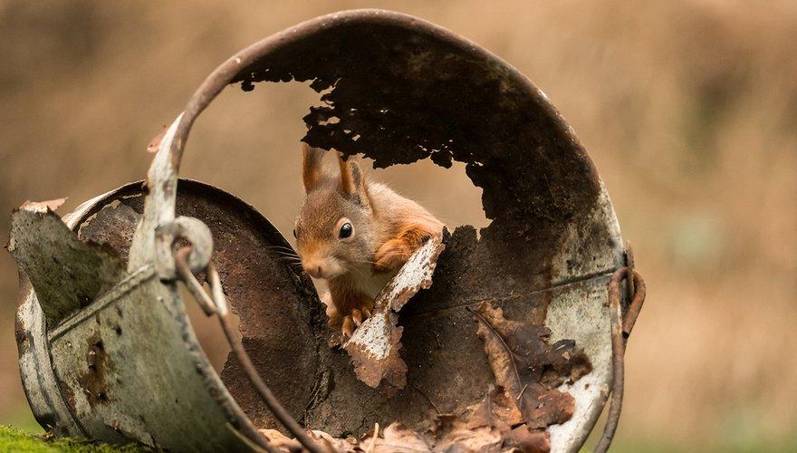 Eekhoorn / Hans Peeters