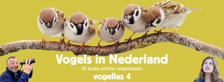 Vogels in Nederland - Vogelles 4