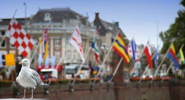 Vlaggen Den Haag meeuw / Shutterstock