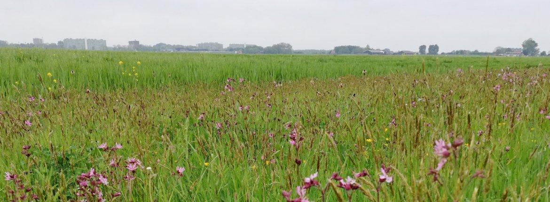 Amstelland vogelboulevard kruidenrijk grasland