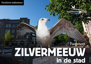 Factsheets stadsvogels Zilvermeeuw