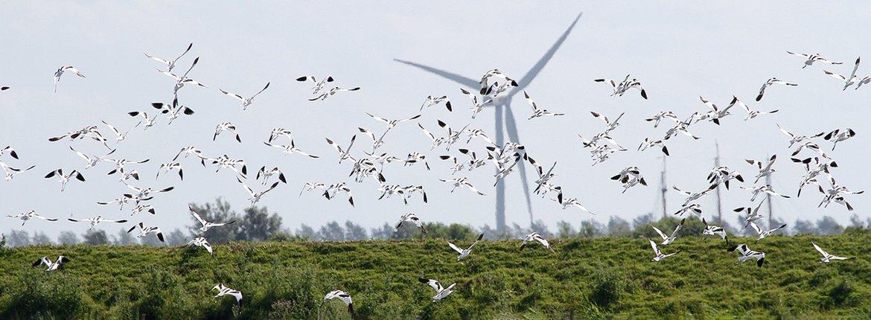 Windmolens en kluten / Michiel Locker - Fotogalerij