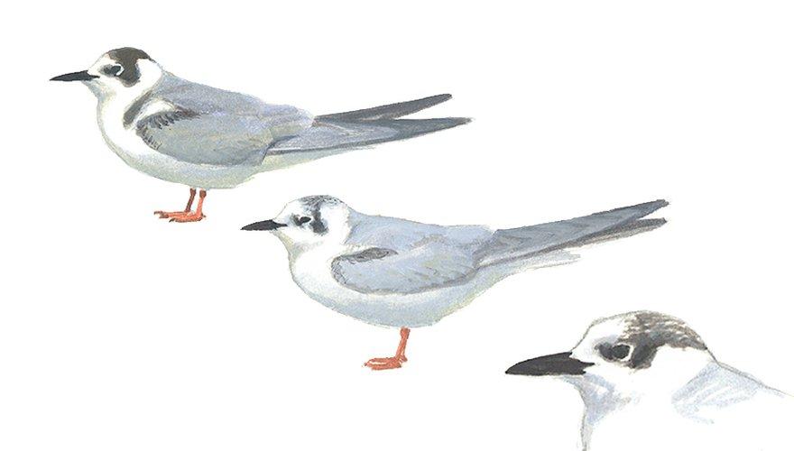 Moerasvogels / Elwin van der Kolk