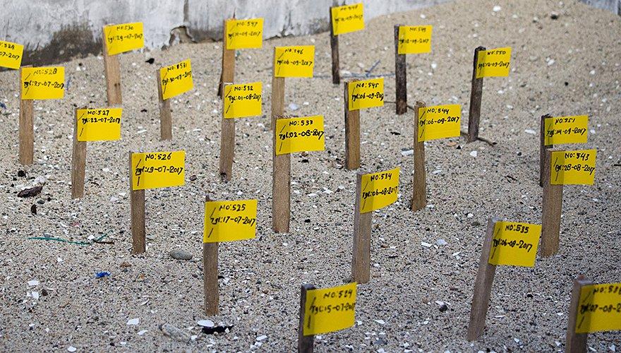 Zandbak met paaltjes / Hans Peeters