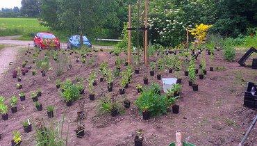 Tuin van Pauline & Dick 3 jaar geleden / Dick Kraaijeveld