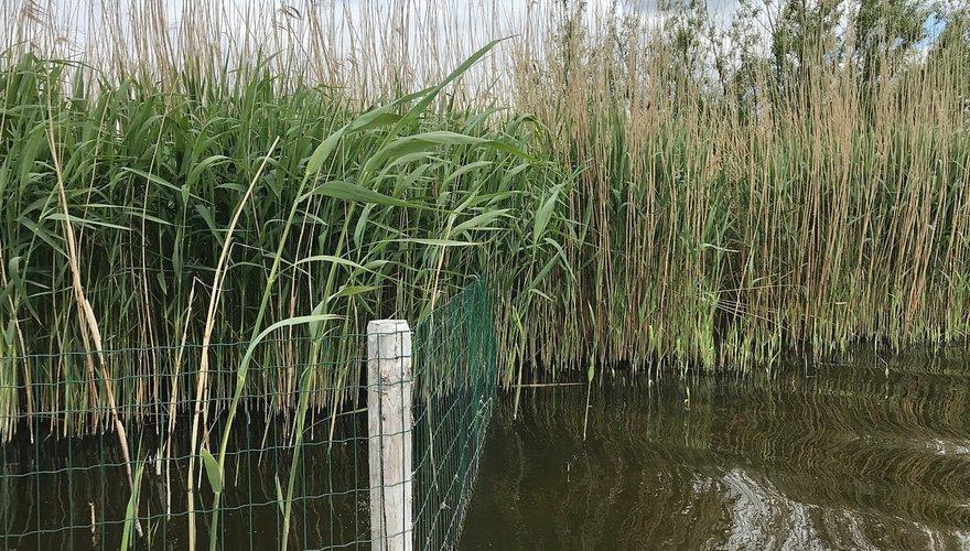 Rietkraag bij Elburg / Jan van der Winden