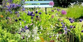 Tuin in Groningen - Magrite Glasz