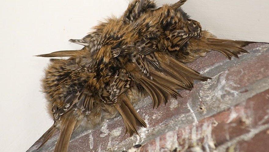 boomkruiper / Adri de Groot Vogeldagboeken.nl