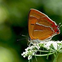 Landelijk Meetprogramma  Vlinders