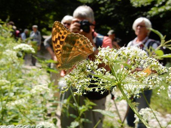 Tijdens vlinderfotoreizen zie je veel vlinders en heb je tijd ze te fotograferen