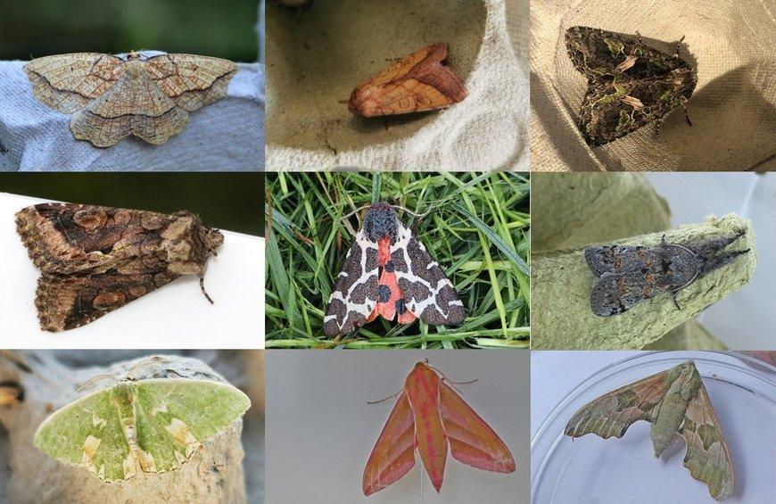 Mooie soorten binnen bimag 2020