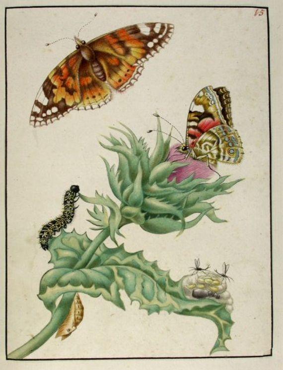 Rupsenboek Maria Sybilla Merian